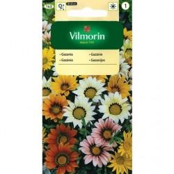 Gazania ogrodowa - Vilmorin 200 mg