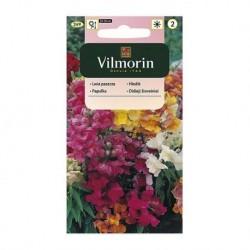 Lwia paszcza niska mieszanka Vilmorin 1g