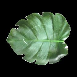 """Talerze """" liść """" 100% naturalne ekologiczne 10 szt"""